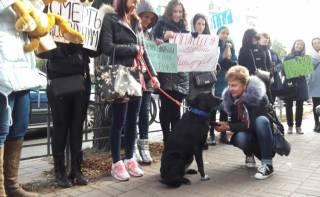 Зоозащитники пикетируют Шевченковскую прокуратуру в Киеве