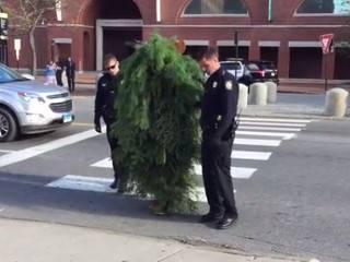 В штате Мэн чудак решил исследовать автомобильное движение, переодевшись в... дерево