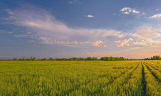 Завтра мораторий на продажу сельхозземель будет продлен на год