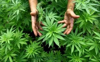 Жители Калифорнии проголосовали за марихуану. И Клинтон