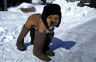 Закупаем теплые вещи... На Европу надвигается самая свирепая зима за последние 100 лет