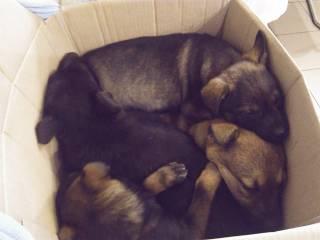 В Херсоне живодеры жестоко убили щенков ради мяса