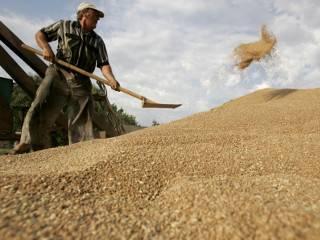Аграрии призвали президента восстановить торговлю с РФ