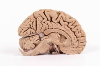 Мозг и эмоции: новейшие научные открытия