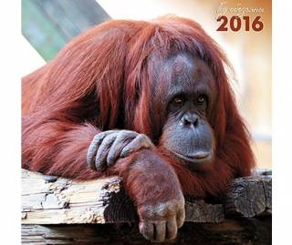 Итоги-2016: бессмысленная суета придурошной обезьяны