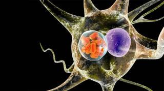 Южнокорейские ученые научились лечить рак... бешенством