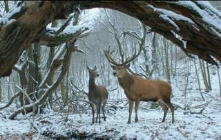 Главную награду «Берлинале» получил венгерский фильм «О теле и душе»