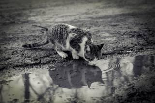 Киевские хроники 20.02.17 - 26.02.17: Кличко спасает котов, копы «скрутили» судью, а хлеб дорожает