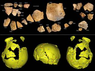 В Китае найдены останки ранее неизвестных науке предков человека
