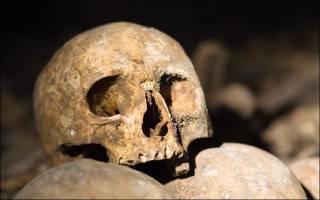 В Португалии нашли самый старый череп из всех когда-либо обнаруженных в стране