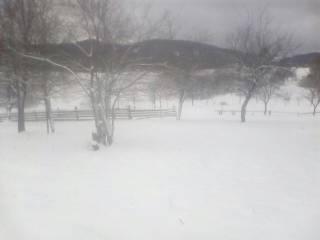 Зима решила вернуться в Украину. Львовскую область замело снегом