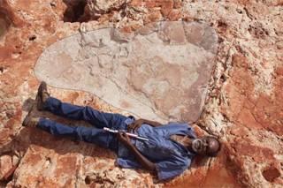 В Австралии найден след динозавра размером с человека