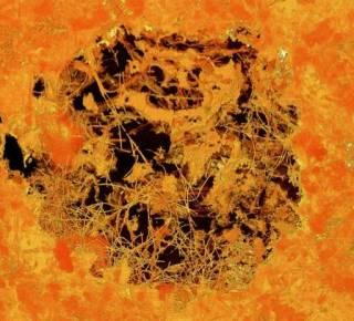 Ученые нашли самые древние в мире многоклеточные организмы