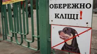 Киевляне все чаще страдают от укусов змей и клещей. Эксперты дают простые советы, как себя обезопасить