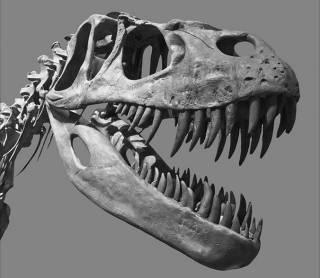 Новинки научпопа: динозавры за окном, игра в карты с физиком на раздевание, и на что не смотреть в Нью-Йорке