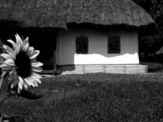 Хуто-хуторянка, или История одного переселения. Часть 95 (село патриархальное, окончание)