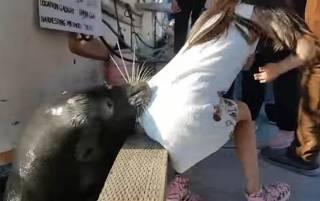 В Канаде морской лев схватил девочку за платье и утащил под воду. Ребенка чудом удалось спасти