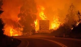 В Португалии начался сильнейший лесной пожар. Есть многочисленные жертвы