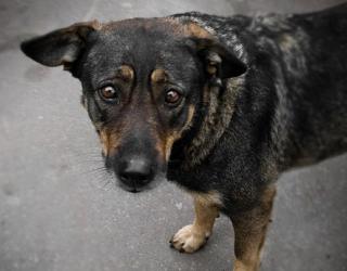 Отныне в Украине действуют сумасшедшие штрафы за издевательство над животными