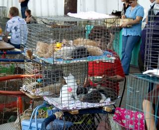 Сравнение цен на животных в Киеве