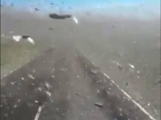 В Сети появилось жуткое видео налета саранчи на дагестанскую глубинку