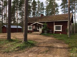 СМИ сообщили о пропаже 37 украинцев в лесах Финляндии