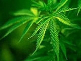 Ученые установили, что курение марихуаны опасно для жизни