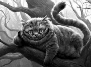 Новинки научпопа: четвертый сон Земфиры, как Шрёдингер котов душил и Алиса в стране наук