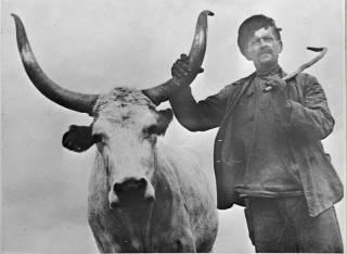Как советская власть ломала украинское крестьянство. Часть 3 (головокружение от успехов)