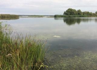 На Херсонщине в озере нашли три мешка с человеческими останками