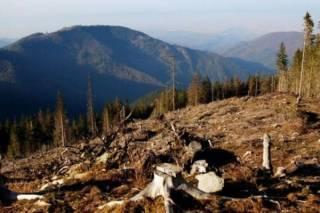 В Евросоюзе недвусмысленно напомнили об обещании Порошенко разрешить продажу леса-кругляка из Украины