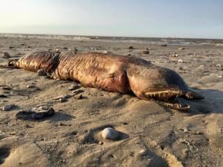После урагана «Харви» на побережье Техаса обнаружили тело загадочного монстра