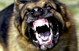 На Львовщине найдено тело девочки с многочисленными ранами от укусов животных
