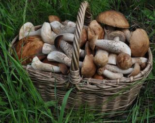 В Украине продолжается грибная лихорадка. Зачастую сбор грибов заканчивается драками и даже смертями