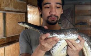 Видеоблогер умер в прямом эфире от укуса ядовитой змеи