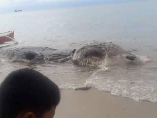 Жители филиппинского острова обнаружили на пляже останки неизвестного монстра