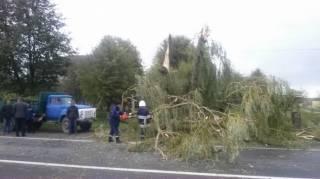 Ураганный ветер наломал немало дров на Львовщине