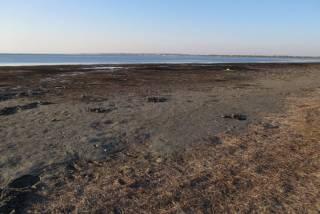 Под Мариуполем Азовское море отступило от берега на рекордное расстояние. Экологи предупреждают о последствиях
