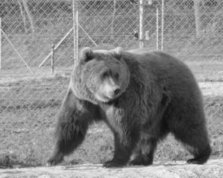 Медвежий приют подо Львовом