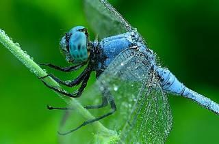 Группа ученых зафиксировала вымирание крылатых насекомых, способное привести к экологическому Армагеддону