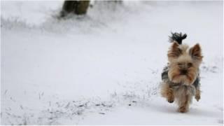 В Украину идут заморозки и мокрый снег