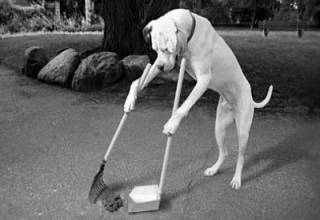 Бред собачий. По мотивам законопроекта о домашних животных