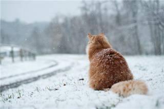 Зима постепенно напоминает украинцам о себе. В Карпаты она уже пришла