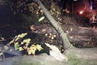 На Ивано-Франковщине поваленное дерево придавило ребенка