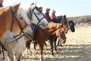 Под Киевом пройдет невероятное шоу с лошадьми. Не пропустите