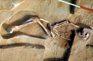 Останки древнейшего жителя Австралии вернули аборигенам