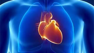 ТОП-10 продуктов для нормализации работы сердца