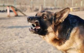 На Днепропетровщине собаки насмерть загрызли женщину. Еще одна прохожая чудом спаслась