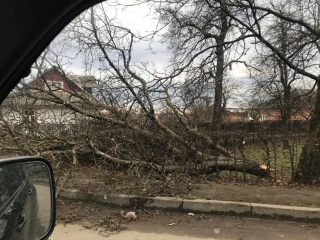 На Ивано-Франковщине ураган вырывал деревья и срывал крыши с домов