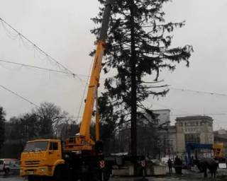 Главная елка Молдовы, привезенная из Украины, оказалась еще хуже киевской